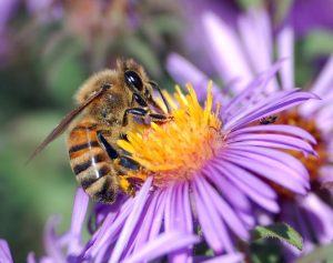 high res for patty honey bee photo